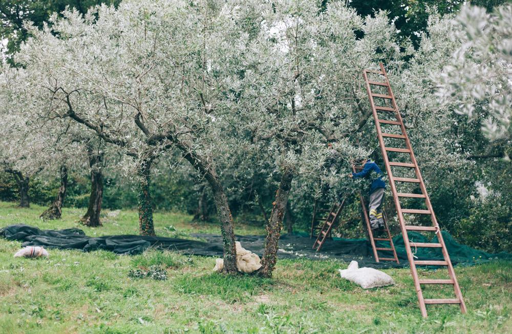 Borgo del Fattore B&B Foligno | Degustazione Olio Novello